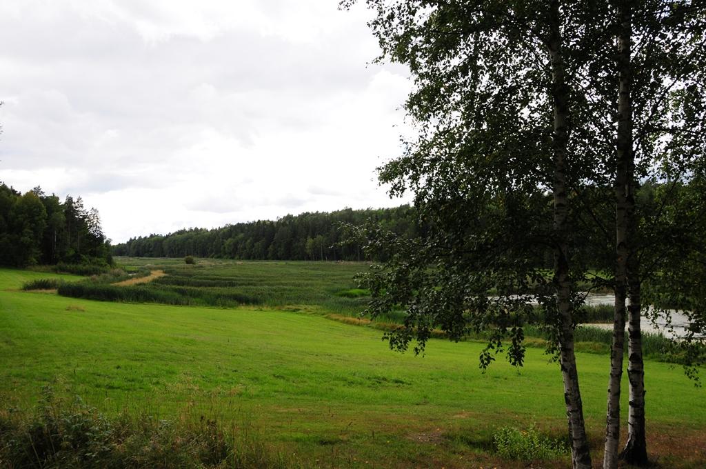 Alhagen-5