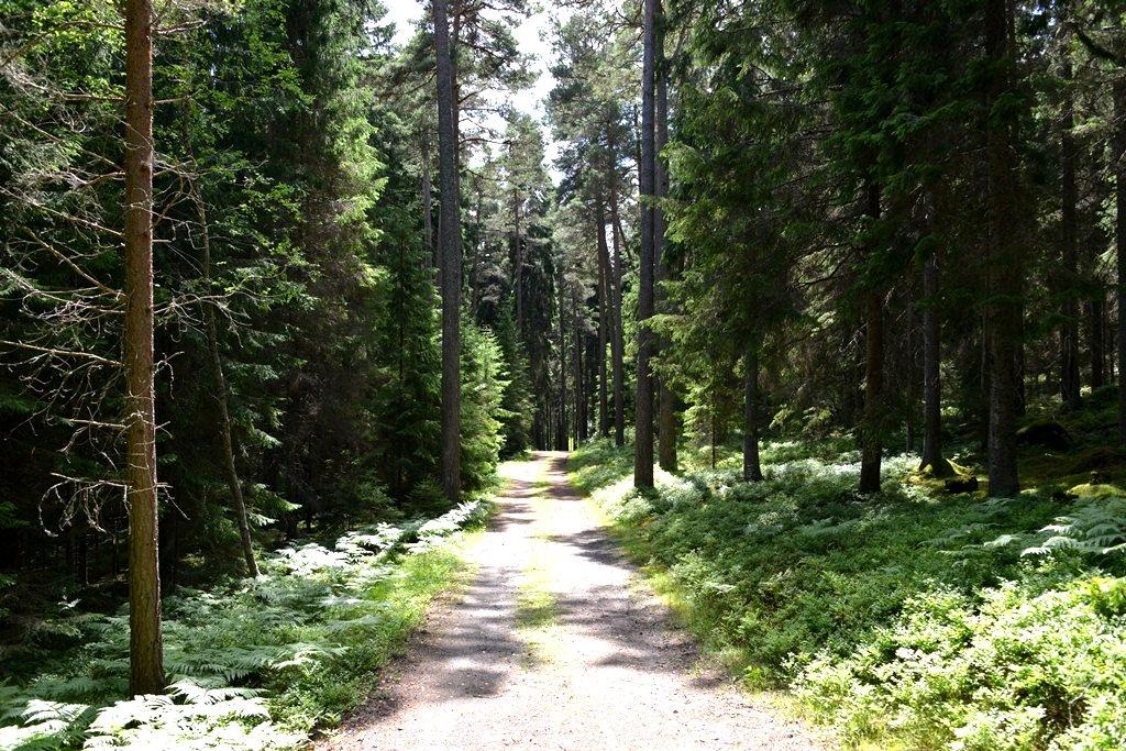 Vägen i skogen