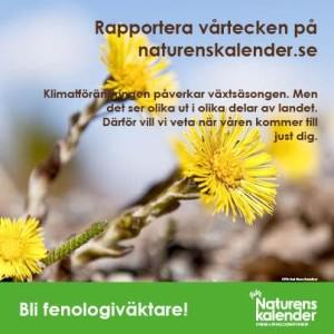 FOTO (tussilago):Gert Olsson/Scandinav