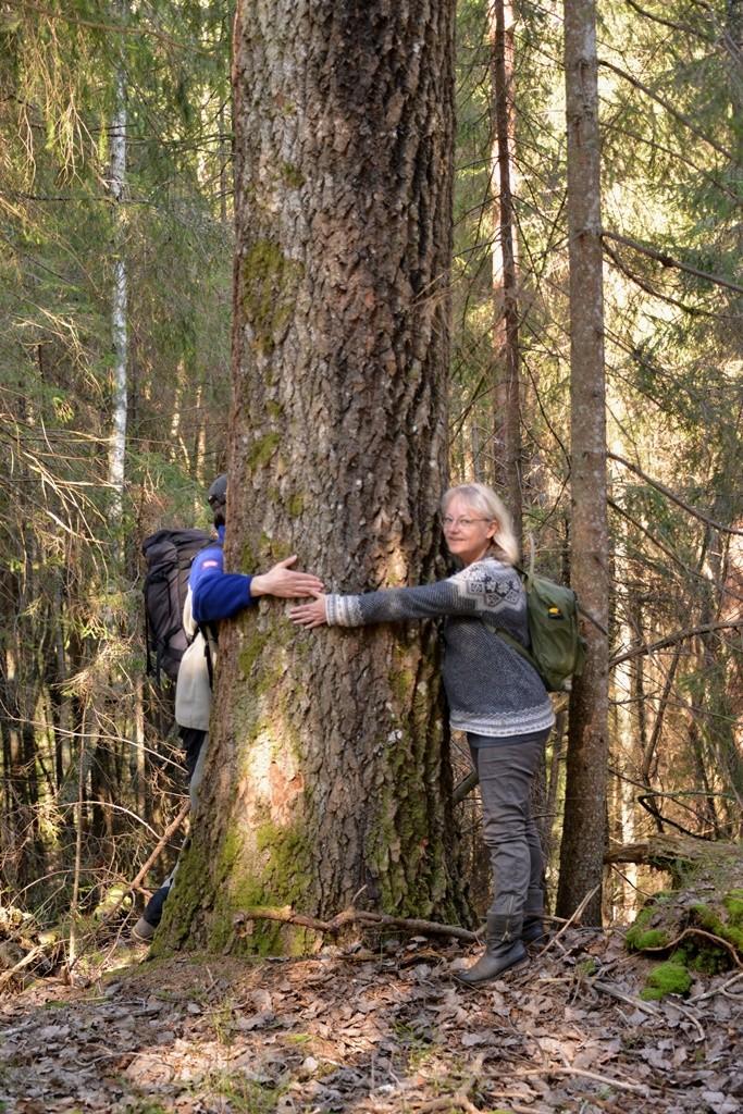 Inte långt från bäverdämmet fanns en synnerligen grov asp, som inbjöd till trädkramning